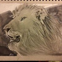 Majestic Lion By Michael Duncan