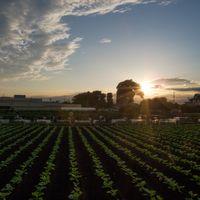 畑の夕景 20140830