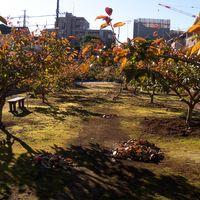 落ち葉の季節 2014年11月15日撮影