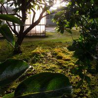 苔が美しくて