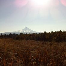 Mt. Hood from Hood River Valley