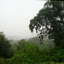 View at Asa Wright Nature Center in Trinidad