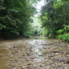 Low predation stream in Trinidad after rain storm