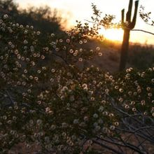 Sunset in the Sonoran Desert (aka home)