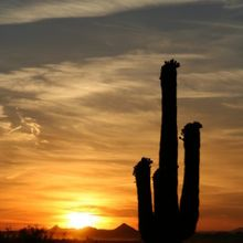 Sunsets and saguaros in Goodyear, AZ