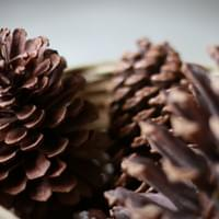 Pine Cones Close-Up