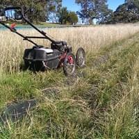 Mowing an Seed Production Area