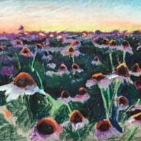 Echinacea Field 12x16 oil pastel on linen