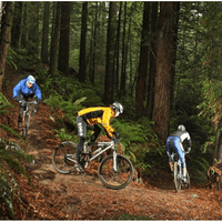 Redwoods Mountain bike track Rotorua NZ