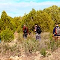 Sampling Juniperus phoenicea in Doñana National Park