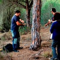 Sampling Pinus pinea in Doñana National Park
