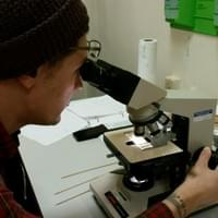 Examining various shards of glass under magnification