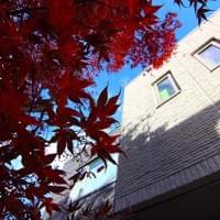 The momiji in fall!