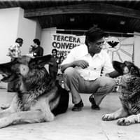 Cesar with dogs at a rally.