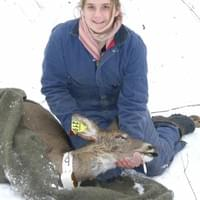 One of my first research positions was working on a white-tailed deer sterilization project at Cornell University.