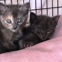 Pebbles & BamBam - Newest additions adopted together 12/30/17