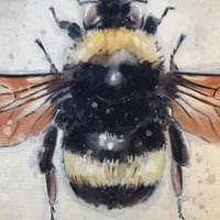 Bee study - framed