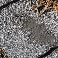 asphalt shingle damage