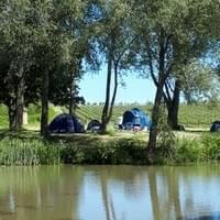 Camping on a vineyard