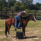 Bryce Burnett Colt Starting Clinic (April 2014)