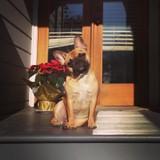 Pat Vane's Dog Phoebe