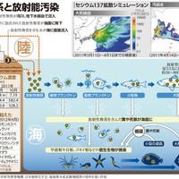 Radioactive contamination and marine ecosystems