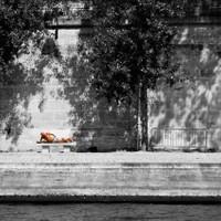 Le Bronzé - Solitudes Urbaines