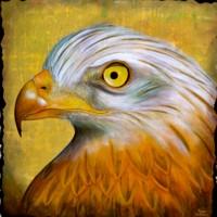 Mirada de Aguila