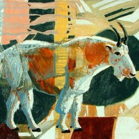 Timpanogos Mountian Goat