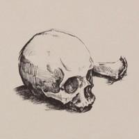 Human Skull, Deer Tibia