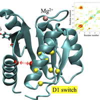 Allosteric network analysis