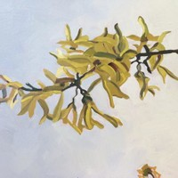 Blossoms on Grey - Forsythia I SOLD