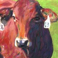 Cow. Number 63.