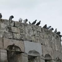The Castle Birds