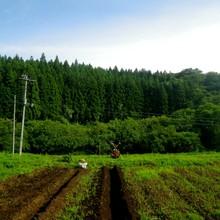畑の風景(南側)