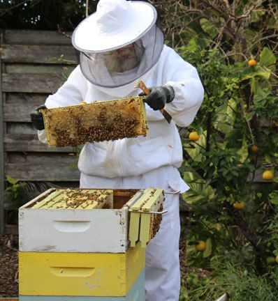 Tom Mawn working with bees