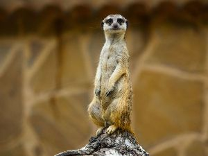 """I was nicknamed """"meerkat"""" because I would constantly pop up in my cubicle!"""