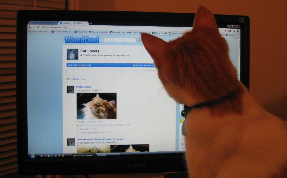 Rooney checks out the Cat Lovers group on FriendFeed.