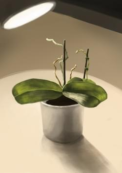 Still life digital painting, with guidance from Justin Oaksford.