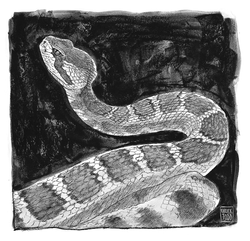 Rattlesnake by Chuck Todd