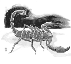Scorpion by Chuck Todd