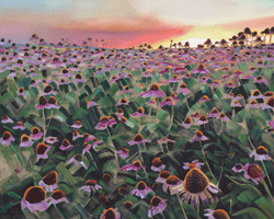 Echinacea Field 48x60 oil and wax on linen