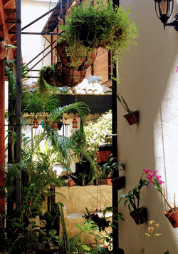 Best Romantic Hotel de Charme / Boutique Hotel with a French Touch in the center of Galle Fort