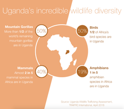 Uganda's Incredible Wildlife Diversity