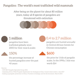 Pangolins : The world's most trafficked wild mammals