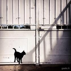 2016-04-10 #France #Creteil This is not a black cat #streetart #graffiti #streetphotography #wanderlust #art #shadow #iPhone