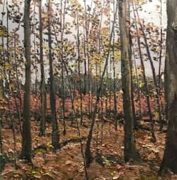 Woods in Fall in the Highlands, 2018