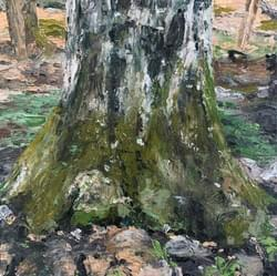 Old Tree in Early Spring, 2020