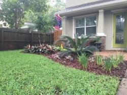 Landscape in south Tampa