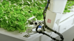 Working with IronOx on robotic organic agriculture to help create a safe, healthy, resilient, and delicious food supply.
